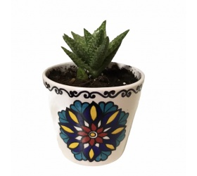 قوار نباتات خزفي