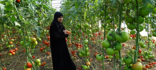 Asala preparing to launch InnovAgroWoMed project in agri-food sector to empower women